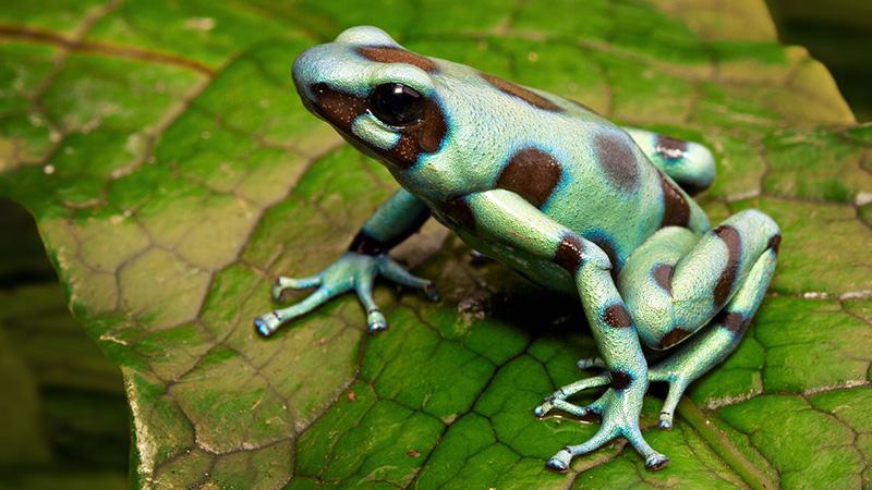 Tree-Frog