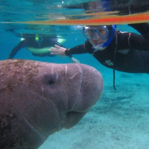 FLorida-Manatee-Swim-Tour