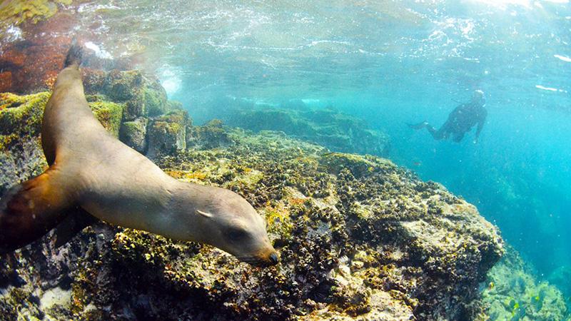 Baja Sur Eco Tours