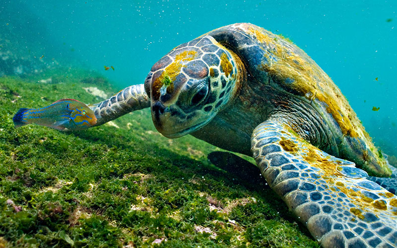 Galapagos Ecuador Green Edventures