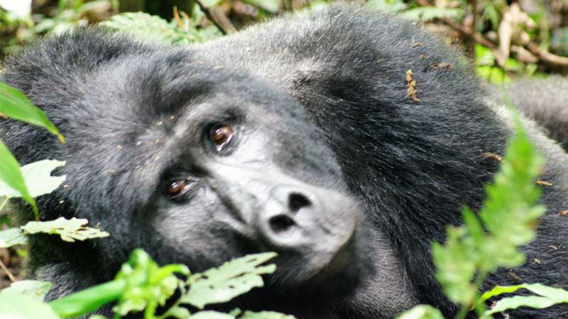 Africa: Uganda Safari Mountain Gorilla Trekking Women's Travel Group – (April 27- May 8, 2022)