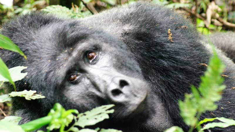 Africa: Uganda Women's Adventure Safari and Mountain Gorilla Trekking – (April 27- May 8, 2021)