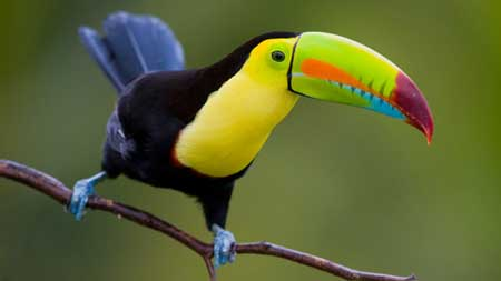 Eco Tour destinations - Costa Rica