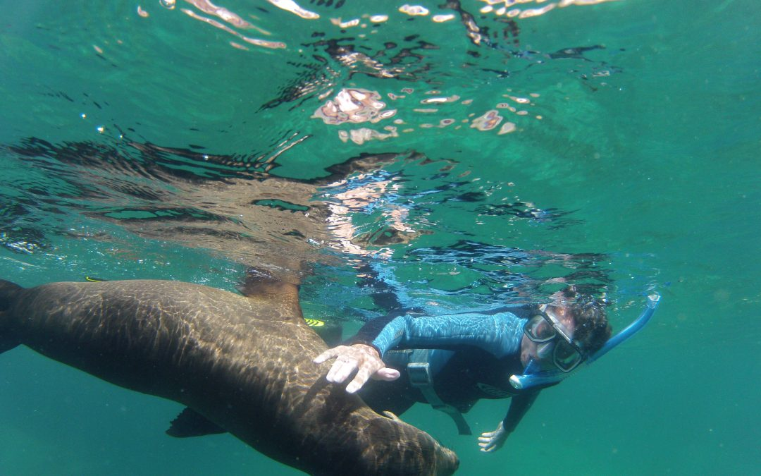 snorkeling with sea lions los islotes mexico
