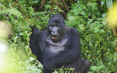 Women's Travel | Uganda Safari + Mountain Gorillas Trekking | There Is Still time to join us April 2020! Seeking 1-2 More Participants.