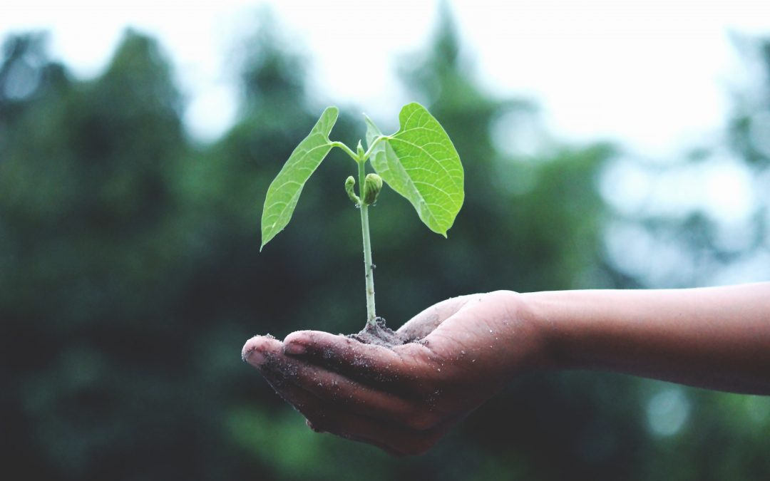 Use Instagram To Help Us Plant 1,001 Trees by Earth Day 2020 | Green Edventures Tours