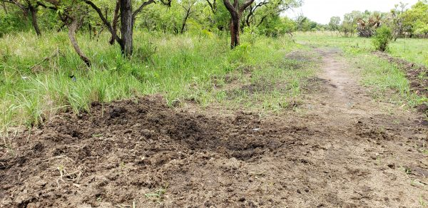 Rhino Midden Uganda