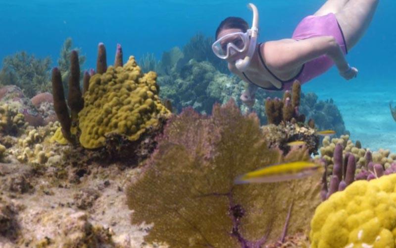 roatan snorkeling adventures