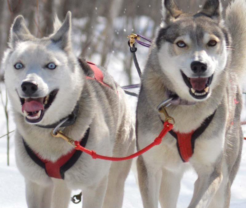 Women's Wisconsin Dog Sledding & Snowshoeing Adventure February 16-19, 2022