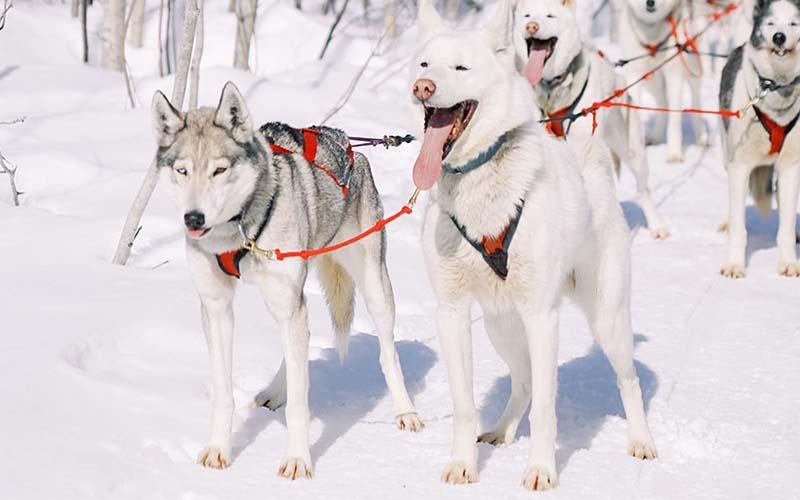 Wisconsin-womens-dog-sledding